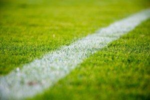 grass-2616911_1920